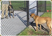 Two Dogs on Either Side of a Fence