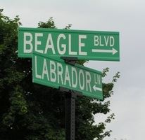Beagle Boulevard and Labrador Lane Crossing